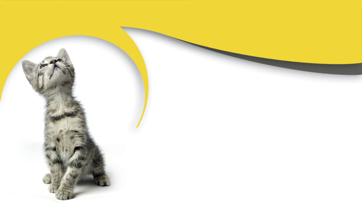 Carte De Visite Gratuite Animalier Chat