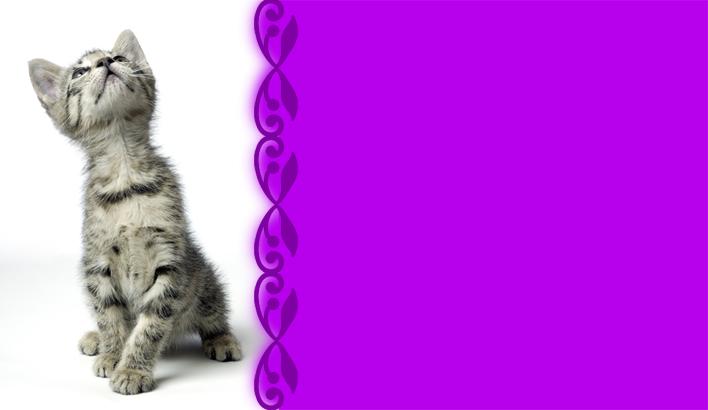 Carte De Visite Gratuite Veterinaire Animaux
